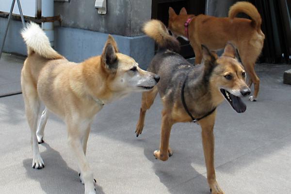 保護した3匹の犬