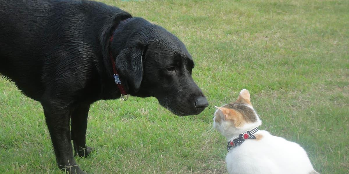 マザールーフの犬猫たち