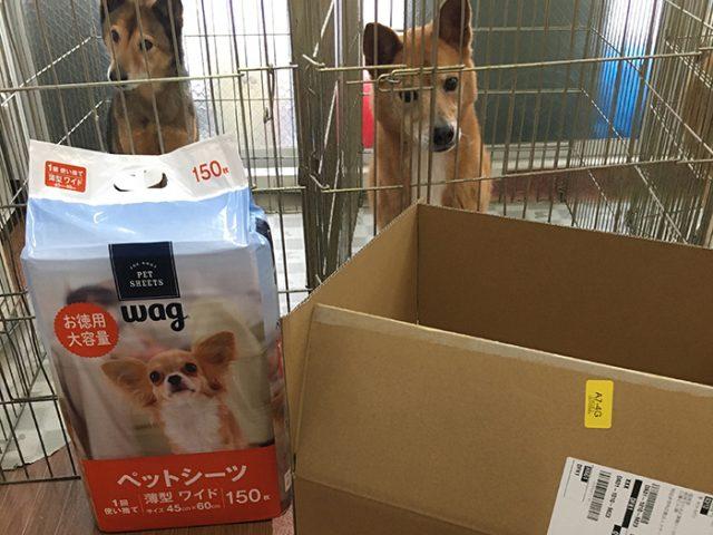 マザー,ルーフ,犬,猫,保護犬,保護猫,寄付,福岡