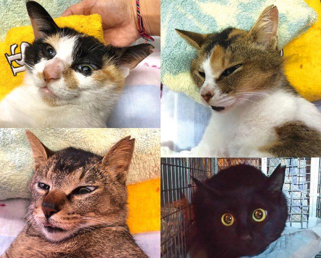マザー,ルーフ,犬,猫,保護犬,保護猫,里親,募集,福岡,地域猫
