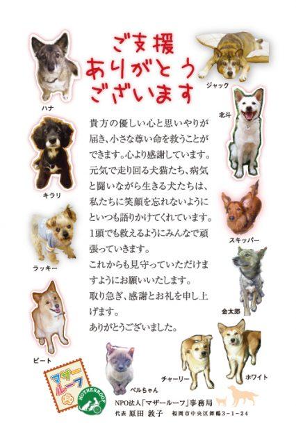 マザー,ルーフ,犬,猫,保護犬,保護猫,寄付,福岡,御礼状