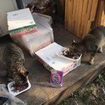 外猫たちの朝ご飯の様子 ~だんだん我儘になっています~