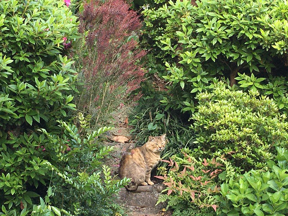 マザー,ルーフ,犬,猫,地域猫,保護猫,寄付,福岡
