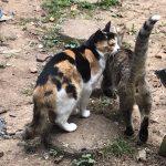 捕獲大作戦Part6 ~残り3匹の問題は三毛猫です~