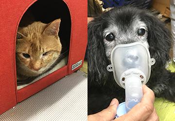 マザー,ルーフ,犬,猫,地域猫,保護,寄付,福岡,吸入