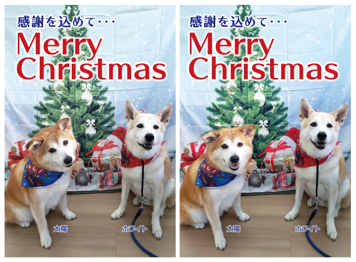 新着,情報,お礼,感謝,ご寄付,ご支援,年末,クリスマス,振り返り
