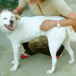 トラウマがある白い犬サニー物語