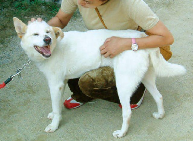 虐待,問題,行動,保護犬,ミックス犬,愛情,訓練