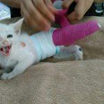 猫を保護しました。緊急支援をお願いします!