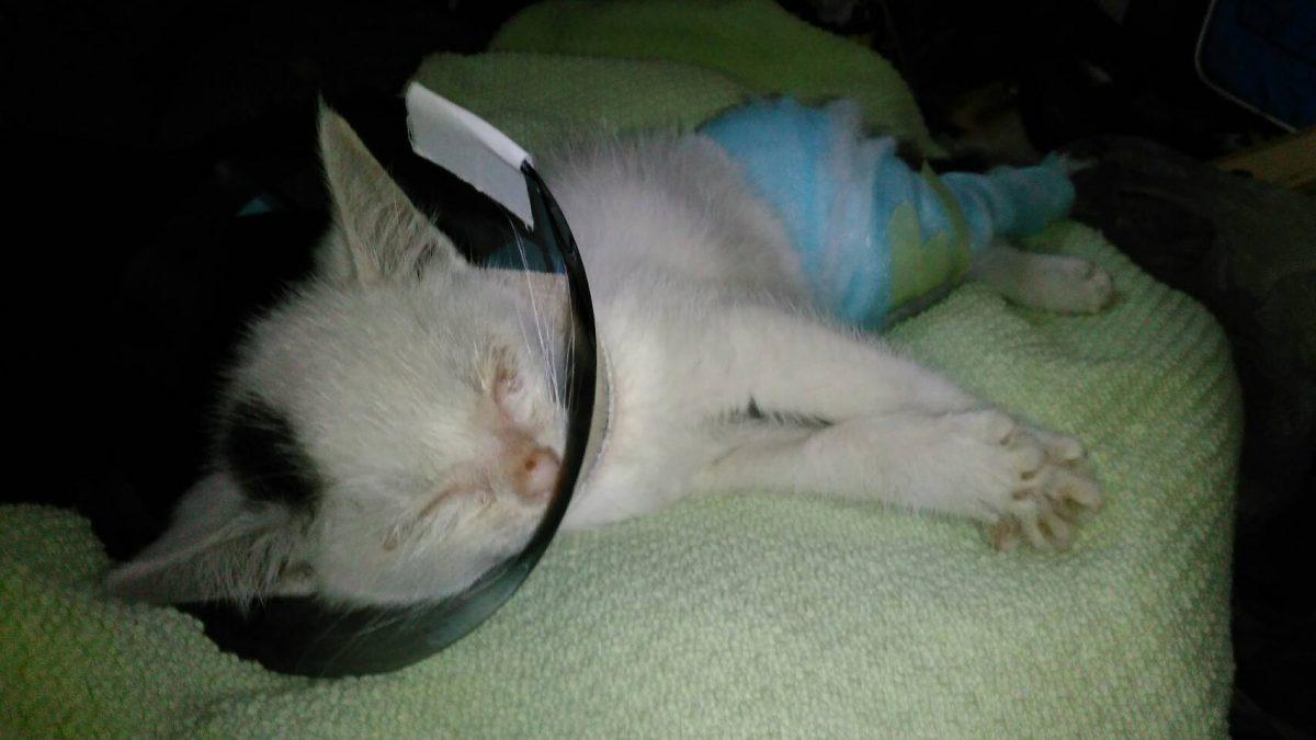 子猫,保護猫,地域猫,,マザー,ルーフ,福岡