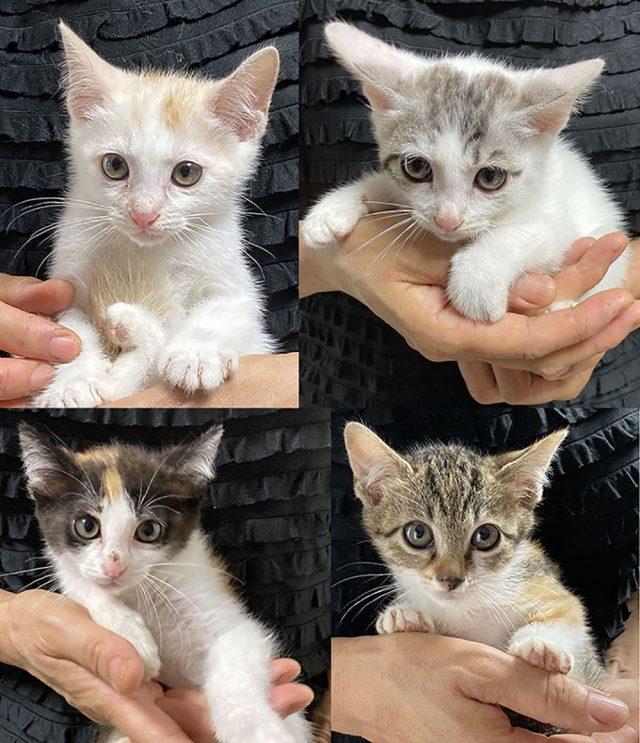 仔猫,保護猫,里親,募集,寄付,お願い,支援