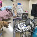 動物病院行きが続いています